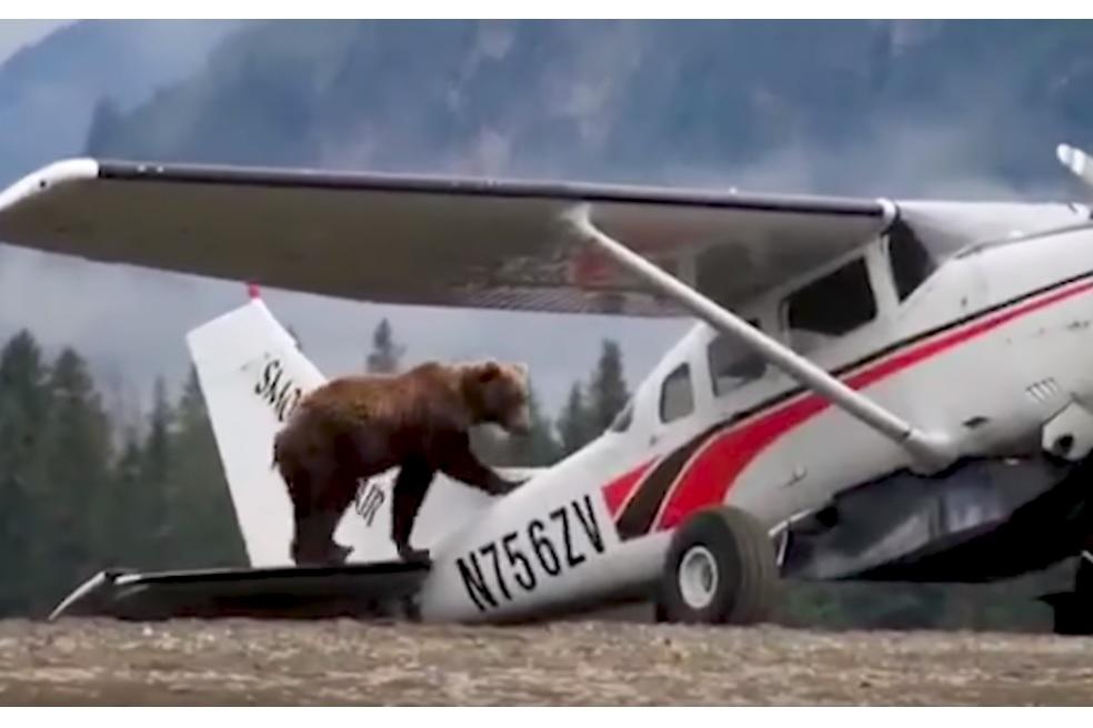 Vídeo Urso sobre avião Cessna 182
